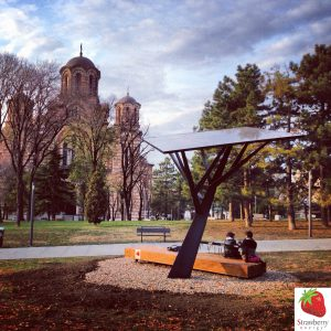 strawberry_tree_black_in_tasmajdan_park_in_belgrade